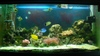 24_oct_2008_fishes_001