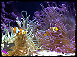 14_apr_2012_fishes_008f